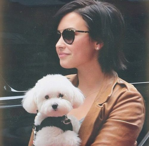 Demi Lovato little dog