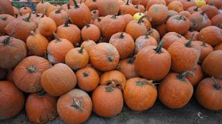 political pumpkin chunking Greta Lint