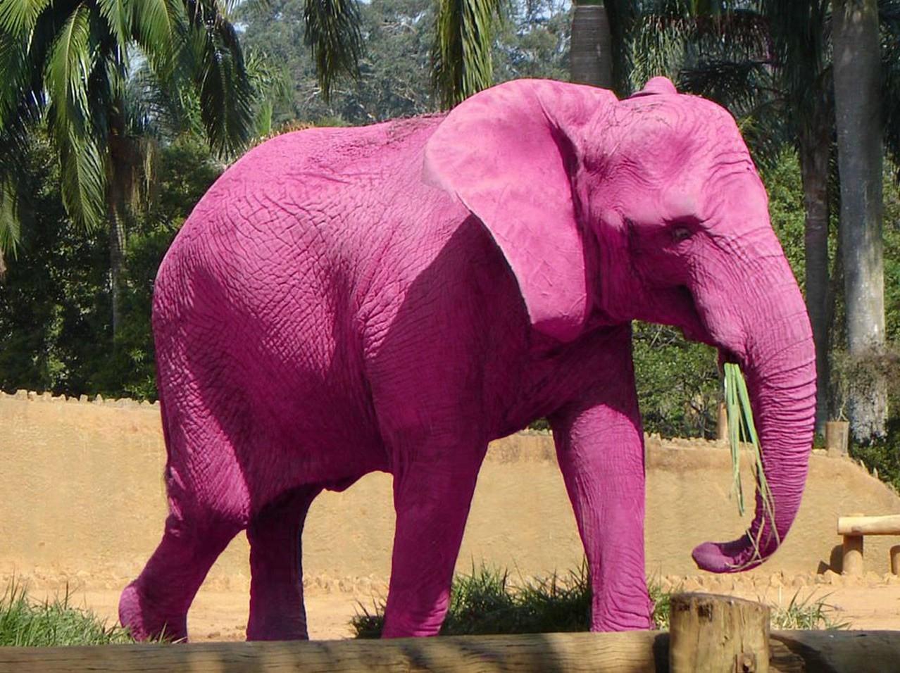 Pink Elefant