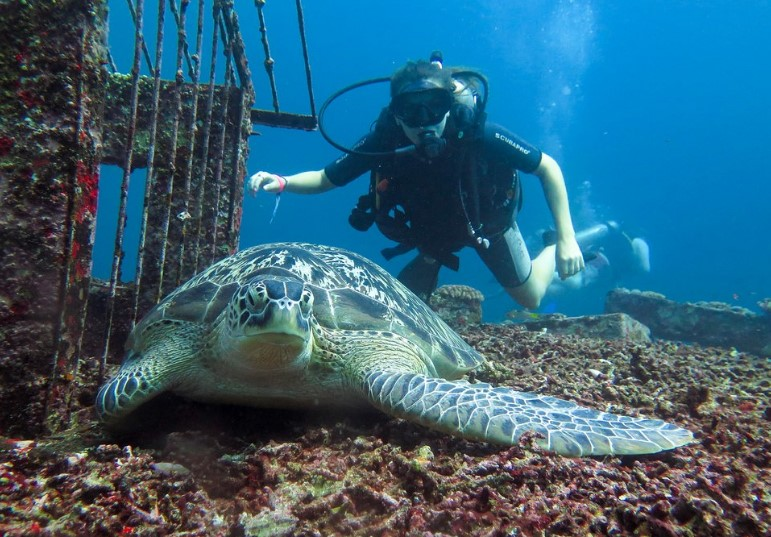 Wisatawan Mancanegara Diving di Gili Trawangan