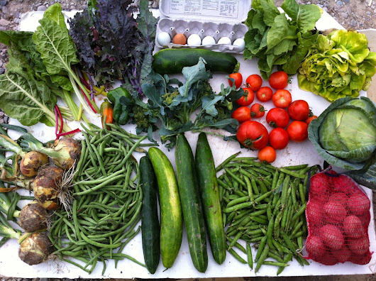 Week 12, Swore Farms CSA 8/12/14