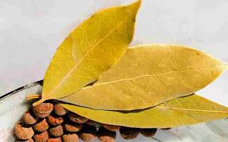 dan cara merebus daun salam untuk asam urat  Manfaat Daun Salam Untuk Asam Urat dan Cara Merebusnya Dengan Mudah