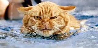 Cat has shrek audition after a swim