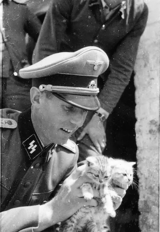 cat+katze+german+nazi+wehrmacht+army+waffen-ss+animal+pet+kitten+wars1