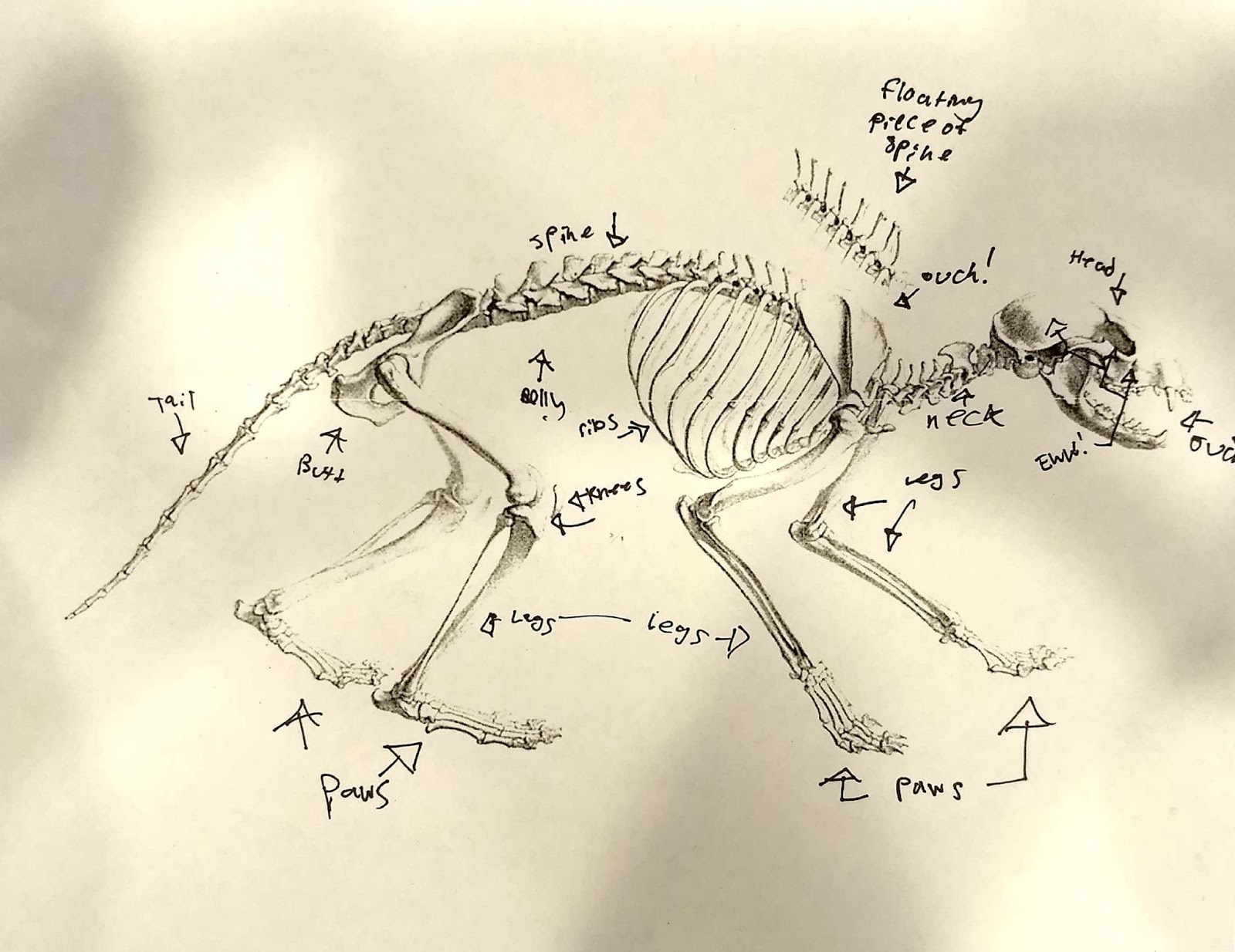 medium resolution of  cecilia s labeling of the skeleton diagram