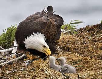 Nido de águilas