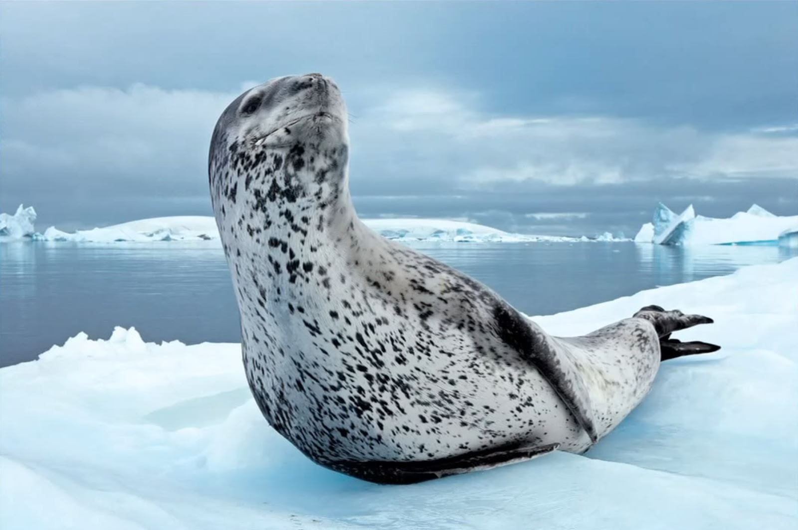 When a seal offers you a penguin, you eat it. - STATIONGOSSIP