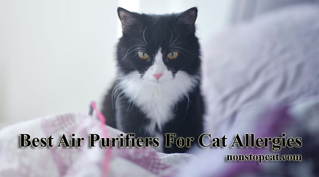Best Air Purifiers For Cat Allergies