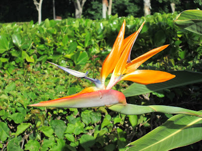 Image result for aloha on my mind bird of paradise