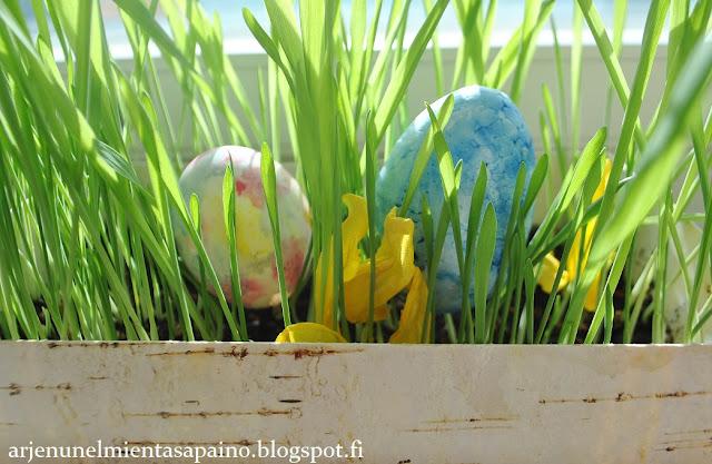 rairuoho, pääsiäinen, ohra, kasvatus, pääsiäismunat