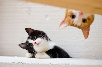 filosofi hidup hewan kucing