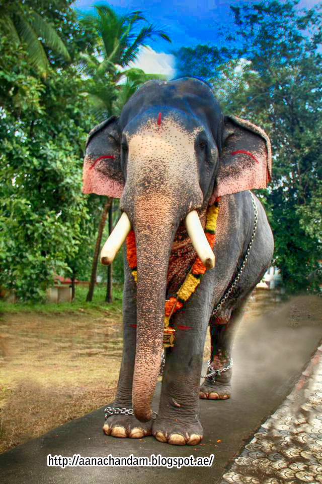 Kerala Elephant Wallpaper Hd Kerala Elephants...