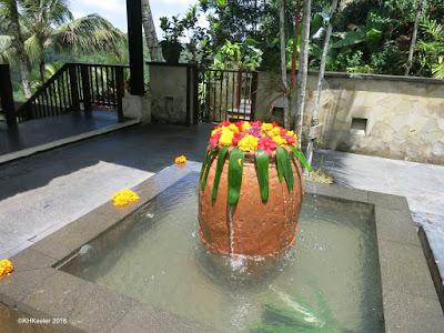 marigolds,Bali