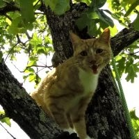 Image of cat in tree crying