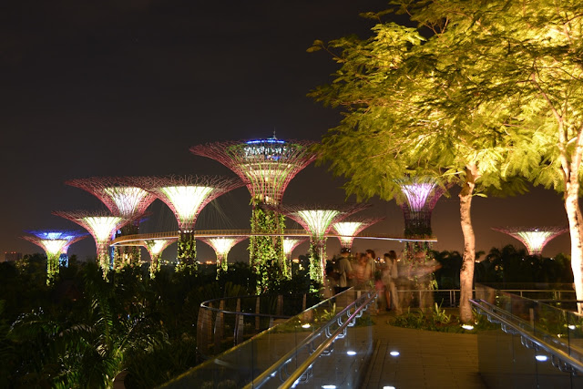 Gardens by the Bay at night supertrees