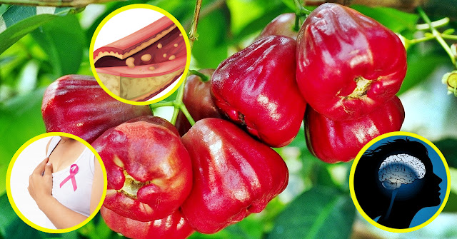 Health Benefits of Rose Apple (Makopa)