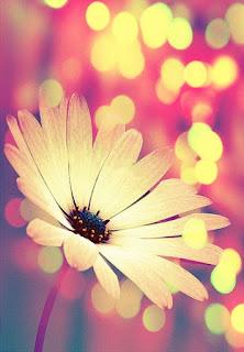 flor-de-patalos-de-color-amarillo