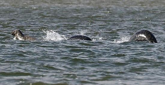 Nova foto Monstro Lago Ness por Ian Bremner