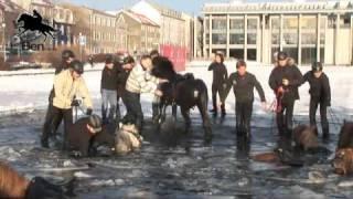 Απίστευτη ατυχία για 11 άλογα και αναβάτες στην Ισλανδία όταν έσπασε ο πάγος σε λίμνη...(βίντεο)