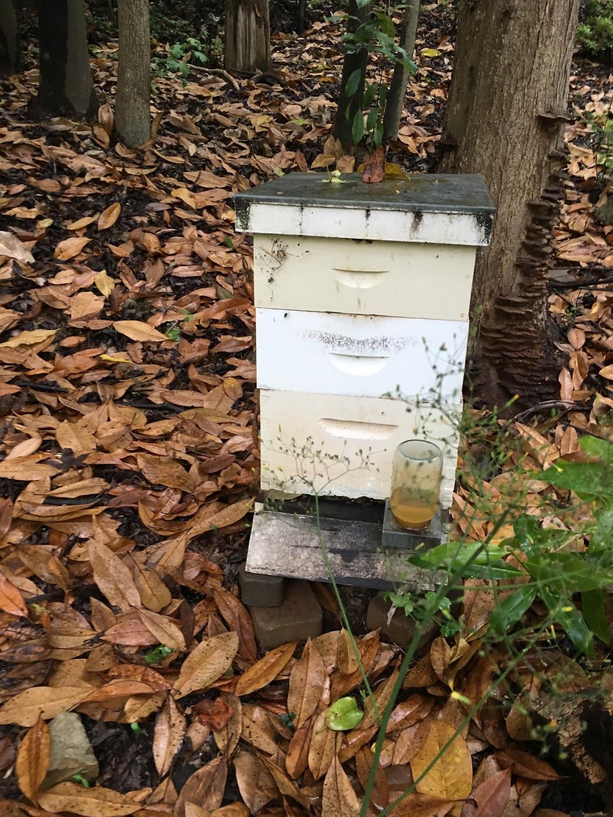 Linda39s Bees