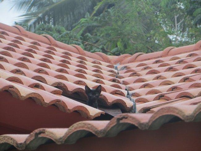 Черный котенок на крыше