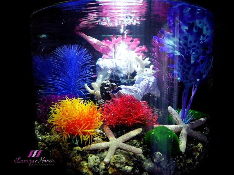 Oase biorb tube aquarium avec examen d'éclairage led