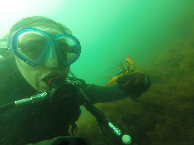 Katie Wanders Diving For Scallops Boston Massachusetts