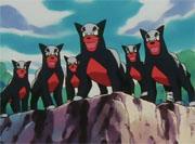 Grupo de Houndour