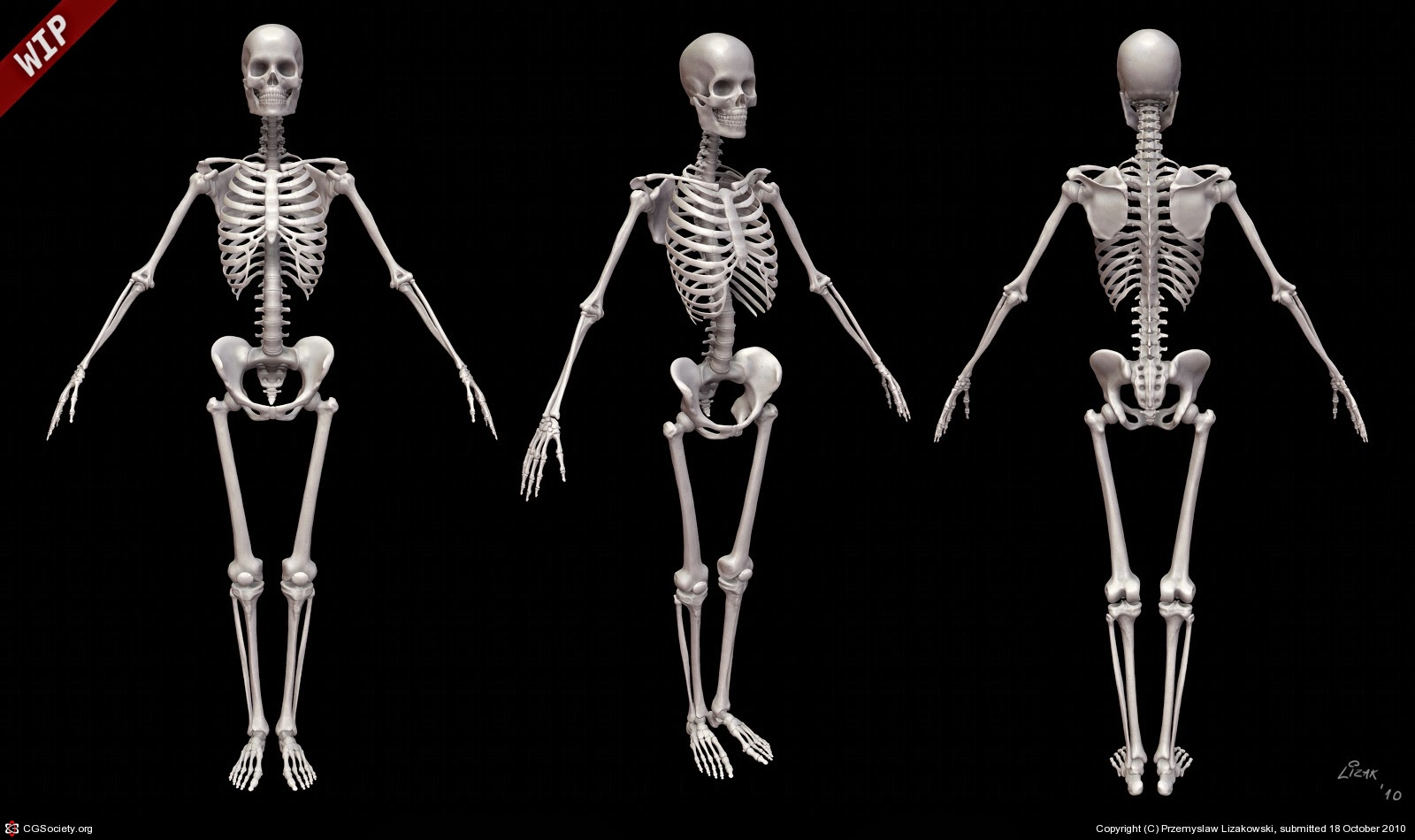 hight resolution of skeleton drawing reference images