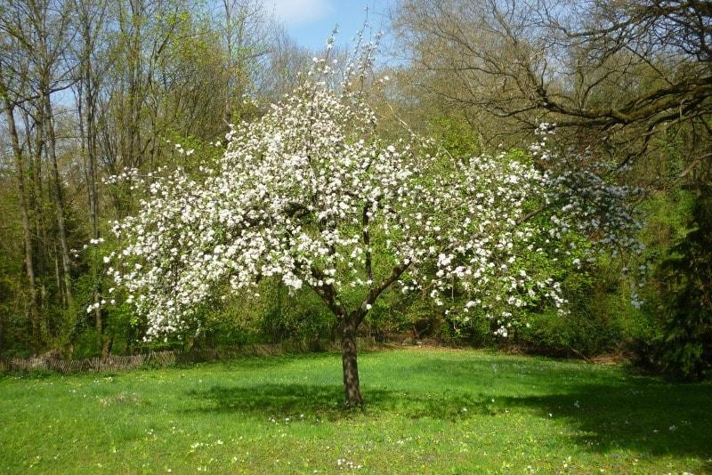 Arboles frutales guia de jardin - Como cuidar los arboles frutales ...