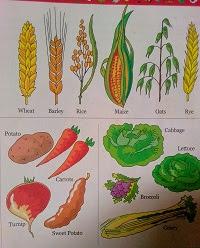 advantages and disadvantages of farm mechanization