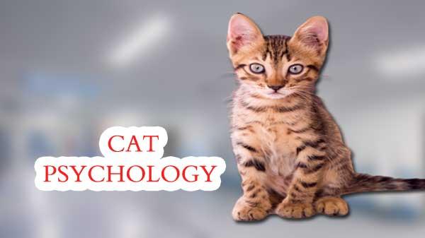 CAT PSYCHOLOGY