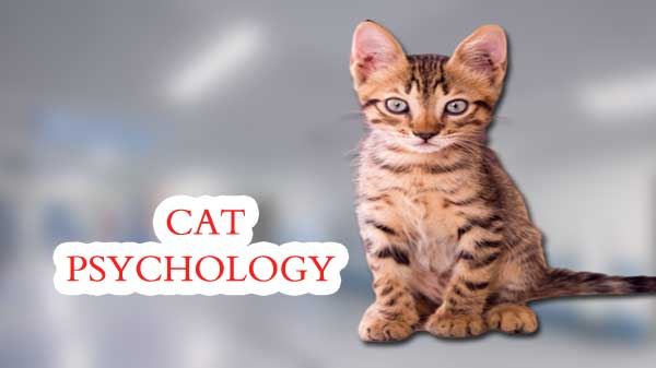 cat psychology facts