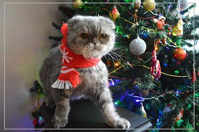 вязание коту и кошке