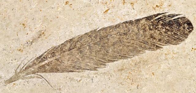 Dinosaurios con plumas y Archaeopteryx