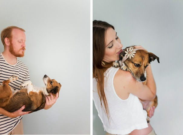 Photo Shoot Featuring A Dog Instead Of A Baby-3