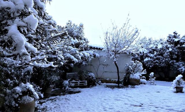 Snow in my garden Loutraki Greece Photo Greeker than the Greeks