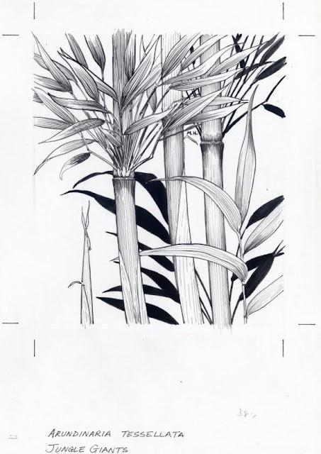 Bamboo Grove Photo: Bamboo Drawing