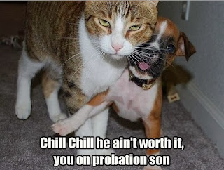 probation lolcat