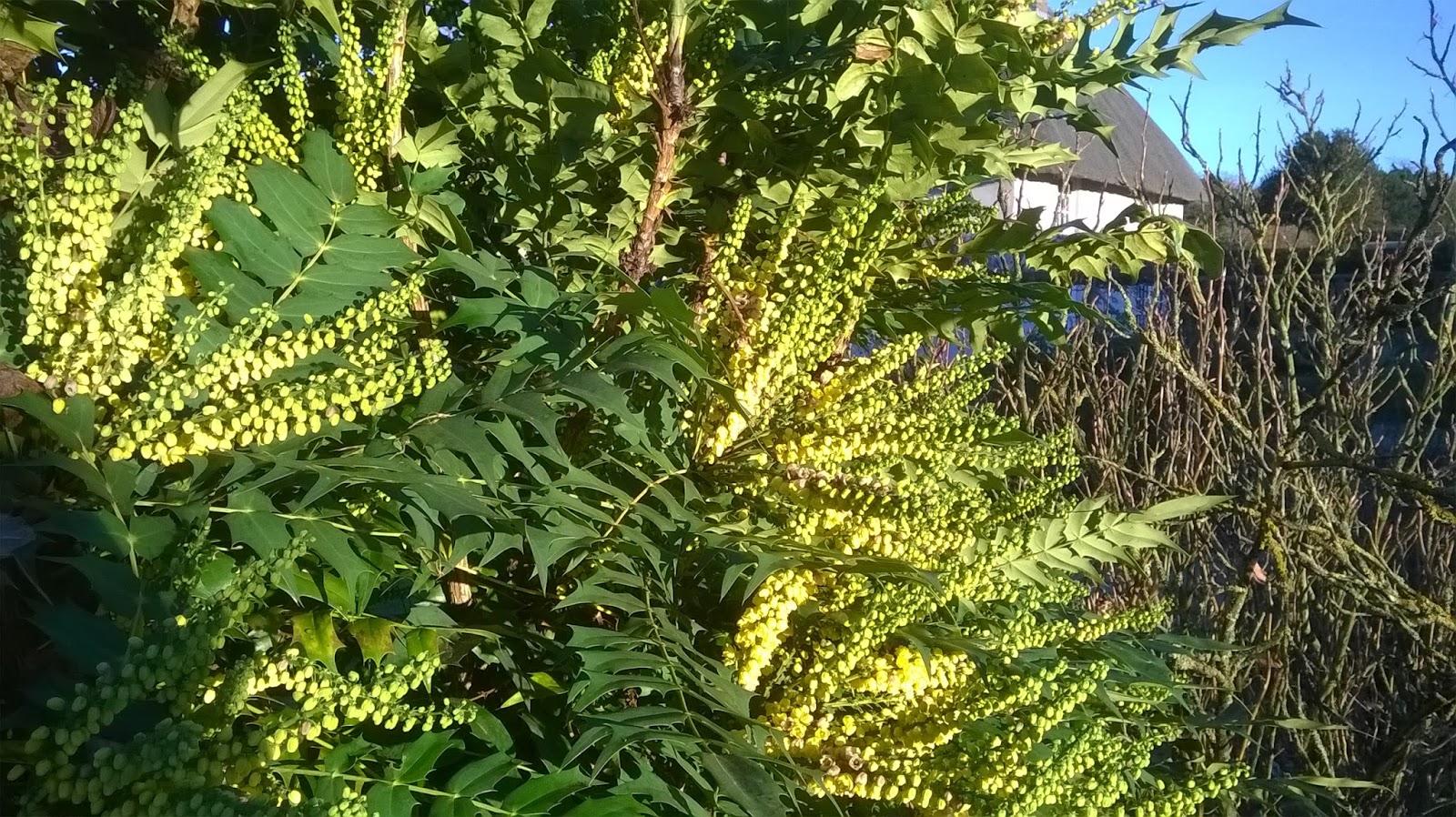 Life Between The Flowers Evergreen Winter Yellow Flowering Spiky