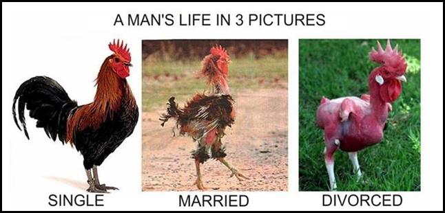 black jokes chicken - photo #34