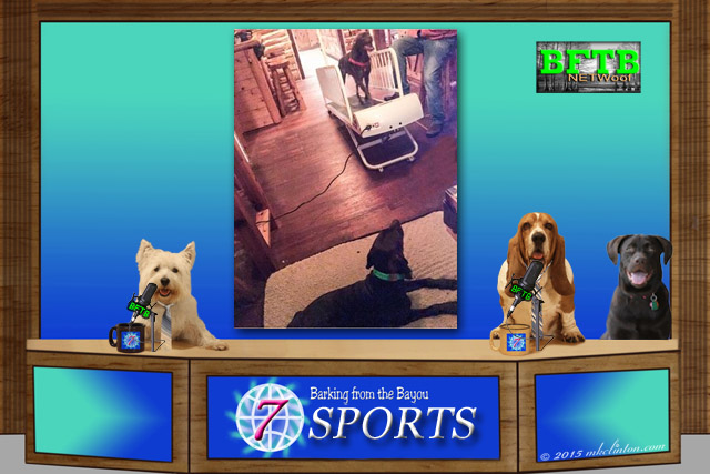 BFTB NETWoof Sports with a dog on treadmill