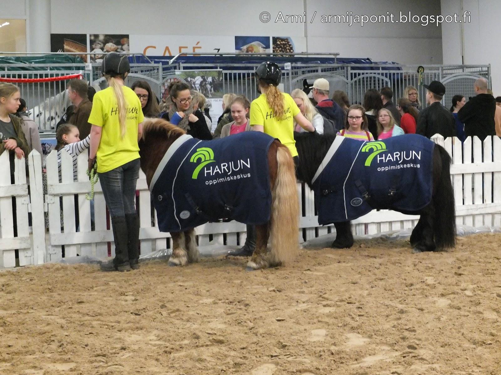 Muisto Horse Fair -messujen Harjuedustuksesta