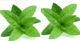 Mint Natural Home Remedies to Get Rid of Mosquitoes