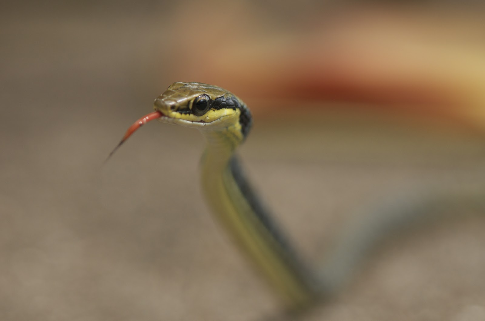 Indonesia Reptiles Partner