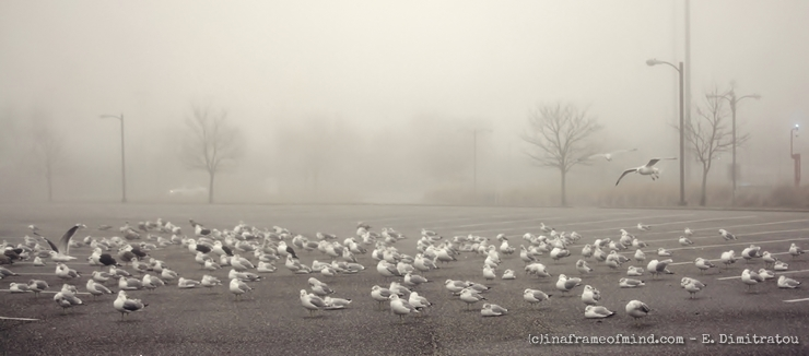 Seagulls in parking lot covered by fog