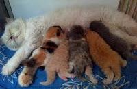https://www.economicfinancialpoliticalandhealth.com/2018/05/this-is-reason-cat-mother-moves-its.html