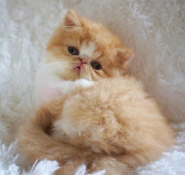 cute-cat-pictures-1