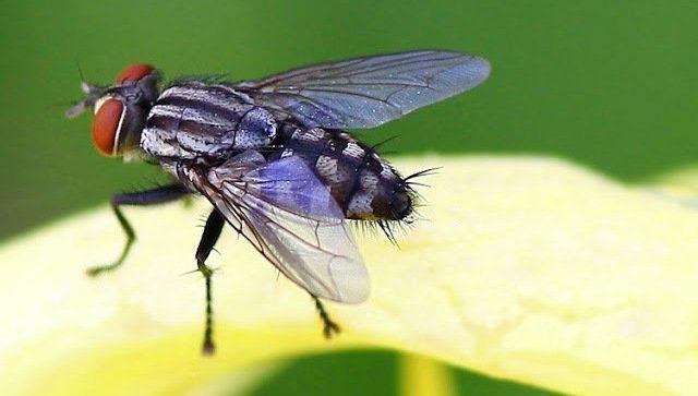 Tidak Bisa Memukul Lalat ? Inilah Alasannya