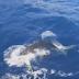 Видео не для слабонервных: разъяренная акула едва не проглотила дайвера